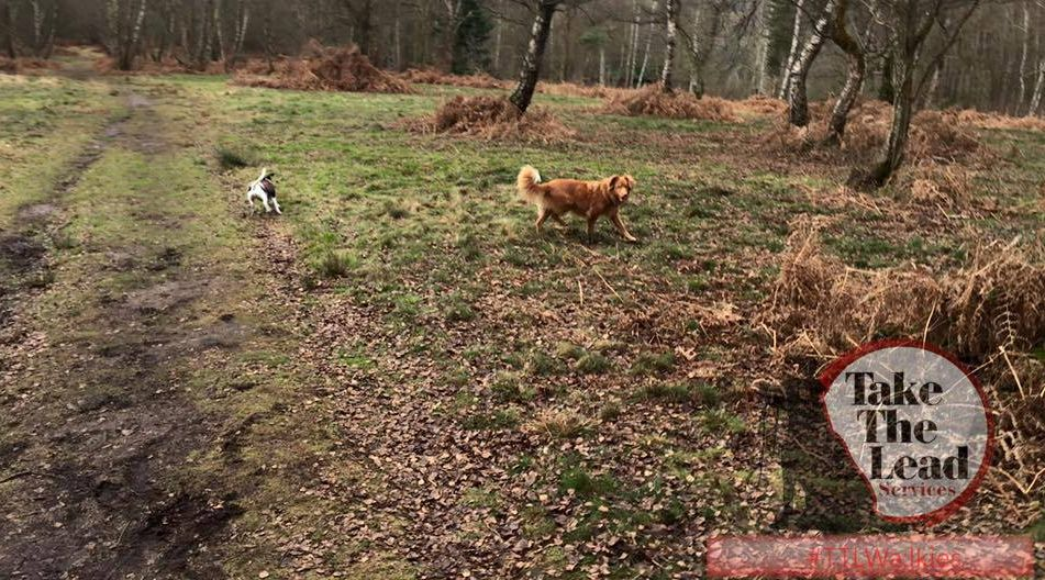 Puttenham common dog walking